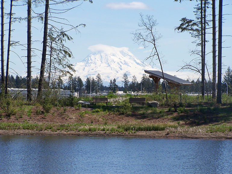 The Hawks Prairie Ponds site with Mount Rainier in the background